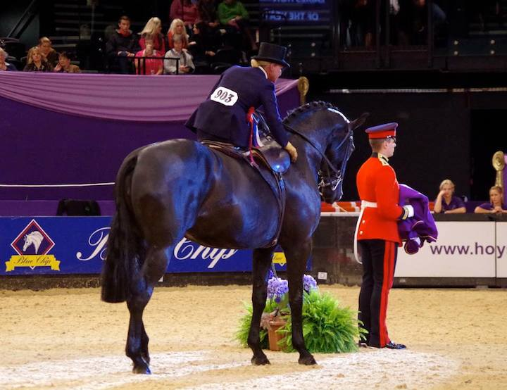 Jayne Pimbley HOYS 2014 Winner Ladies Hunter